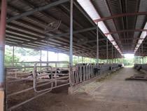 平成14年に建設されたフリーバーン牛舎